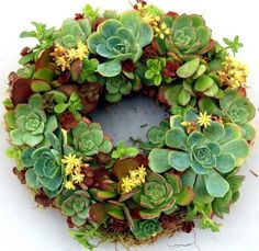 A living wreath of succulents. Instead of a wreath I made this out of a two tier water fountain that had a crack in it. They come back every year.