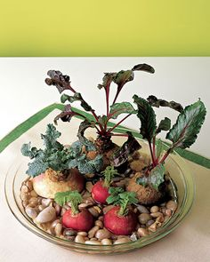 Growing Root Vegetables -- will have to try this before doing with the kids.