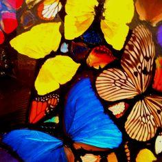Damien Hurst Butterflies
