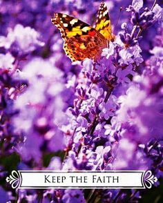 ~Butterfly Oracle Cards for Life Changes by Doreen Virtue~ . . . #keepthefaith #222 #111 #staypositive