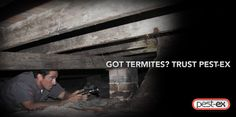 When it comes to #termites, you need to be on the lookout for any signs of termite invasion, the signs could all be there and you would have missed out on the same. So call us today or consult: 1300 737 839