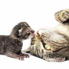 Reposting @catsoftherworld: ~~ 😍 Adorable 😽😽😽 Double Tap 💕💕💕 👉 Follow @catsoftheworld  #cat #cats #catsagram #catstagram #instagood #kitten #kitty #kittens #pet #pets #animal #animals #petstagram #petsagram #photooftheday #catsofinstagram #ilovemycat #instagramcats #nature #catoftheday #lovecats #sleeping #lovekittens #adorable #catlover #instacat #love #instagood #picoftheday #smile
