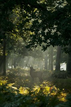 Enchanted forest ruled over by the Ent King who, by day, turns into a handsome stag that patrols the forest for signs of sorcery & magic....