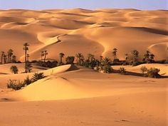 The world's largest desert: The Sahara, in Africa. A troubled and beautiful place covering 11 countries in North Africa, from the pyramids of Egypt to the Tunisian oasis. Desert Life, Desert Oasis, Desert Tour, Largest Desert, Deserts Of The World, Excursion, Nature Wallpaper, Iphone Wallpaper, Palm Trees
