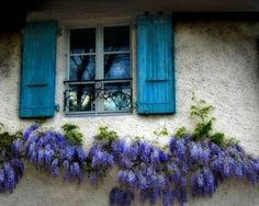 aqua shutters and purple flowers