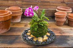 Kokedama String Gardening - Kokedama Kit - Japanese Moss Balls