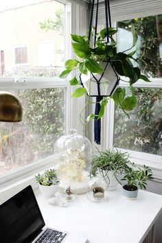 A selection of hanging plants and plant pots on the desk of a home office
