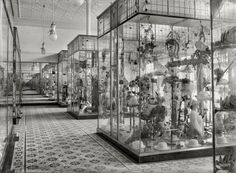 "New Zealand, 1915. ""Display cases in the Economic drapery store, Wanganui."" Tesla Studios glass negative by Frank J. Denton."
