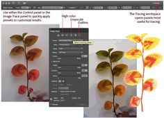 Tutorial and Guide for Image Trace in Illustrator CS6