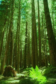 Washington Forest by DKAIOG http://www.davidaimone.com, via Flickr