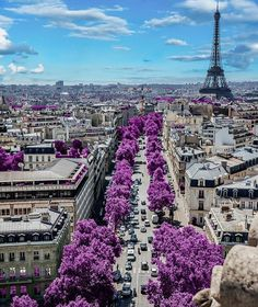 Paris in bloom Photo by @alepetra_