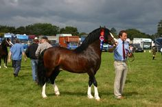 one of many outstanding entries in our showcase of Welsh horses