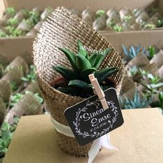 Let Your Wedding Covered help you choose wedding favors that your guests will love and be in keeping with the theme of the day. Succulent Wedding Favors, Wedding Favours, Wedding Gifts, Handmade Wedding, Rustic Wedding, Terrarium, Plant Projects, Ideas Para Fiestas, Succulents Diy