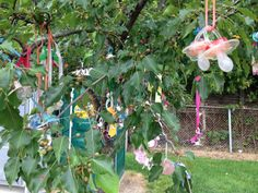 Northville's 'Binky Tree' Attracts Statewide Attention