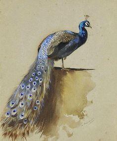 Peacocks & other birds