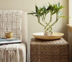 7 Feng Shui Basics to Make Your Home Harmonious