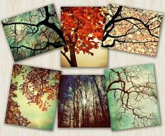 I love tree art.  Nature photography tree photography home decor by CarlChristensen, $85.00