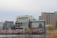 ☆メガネ1番お花見情報☆ 上野不忍池の桜が満開!! ここにはこのシーズン1日15万人位の 人々が国内・外から訪れるそうです。 それにしても感動的な美しい風景でした♪