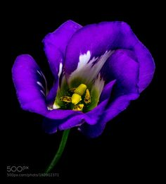 purple by pinarelloherbert. @go4fotos
