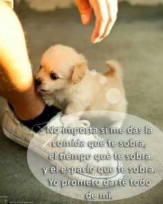 El mejor amigo! Pray For World, Animals And Pets, Cute Animals, English Bull Terriers, Animal Posters, White Dogs, Baby Dogs, Dog Quotes, Animal Party