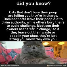 Cat Care 101 did you know? I Love Cats, Cute Cats, Funny Cats, Funny Animals, Cute Animals, Animal Facts, Cat Facts, Crazy Cat Lady, Crazy Cats