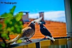 Dove by Fırat Yazıcı on 500px