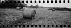 hay bales Fuji GW690III 6x9 Professional  35mm Ilford HP5 taped in 120 backing paper. developed in LC29 20deg 119 6.5min 35mm film mediumformat camera 6x9 sixbynine fuji gw690iii 90mm 35 ilford hp5 analog buyfilmnotmegapixels filmisnotdead haybales rural landscape sprocketholes perforation