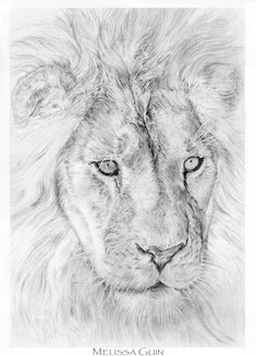 Lion by Mguin on deviantART Big Cats, Cats And Kittens, How To Draw Fur, Lion Sketch, Tiger Drawing, Roaring Lion, Black Lion, Male Lion, Lion Of Judah