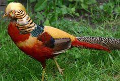 Jornal dos Bichos - Animal em Fatos, vídeos e fotos: Top 10 incríveis animais híbridos
