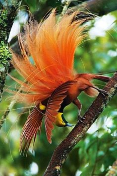 'Birds of Paradise' at the National Geographic Museum 'Amazing Avian Evolution' exhibit showcases stunningly colorful birds in all their preening excess. Kinds Of Birds, All Birds, Love Birds, Angry Birds, Exotic Birds, Colorful Birds, Exotic Pets, Tropical Birds, Exotic Flowers