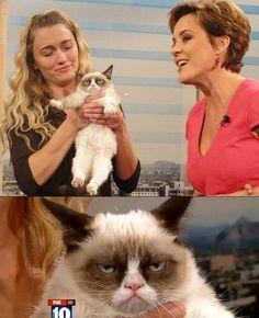 bloglosingrip - fotos engraçadas 14 - Porque ninguém deixa esse gato em paz?! Ele nunca vai deixar esse mau humor desse jeito!