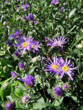 Tvorba eshopu – vytvorte si vlastný eshop s BiznisWebom Aster, Flowers, Plants, Plant, Royal Icing Flowers, Flower, Florals, Floral, Planets