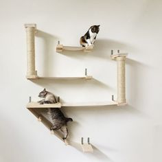CatastrophiCreations The Roman Cat Fort #cat, #Cool, #fun