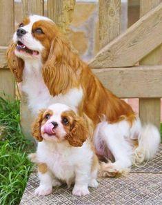 """cuteandadorable: """"Adorable!❤ """""""