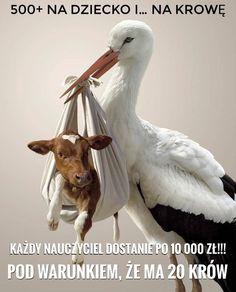 """Jarosław Kaczyńskimówił podczas konwencji PiS wKadzidle k. Ostrołęki, żeszczególnie ważna jest """"sprawa wsparcia tych gospodarstw rolnych"""", które będą hodowały zwierzęta """"zwłasnego chowu"""", woparciu owłasną paszę iktóre będą zapewniały zwierzętom tzw. dobrostan. Padła konkretnaobietnica. Wzamian zatootrzymywały bardzo poważne wsparcie. Najmniej 100 złotych odjednego tucznika i500 złodjednej krowy, ale może byćwięcej #pis #humor Abs, Memes, Funny, Life, Animals, Crunches, Animales, Animaux, Meme"""