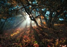Photograph Forest Sunlight by Yan L on 500px