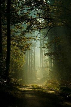 65 new Ideas for fantasy art forest paths Forest Path, Tree Forest, Forest Road, Magic Forest, Forest Light, Conifer Forest, Forest Scenery, Foggy Forest, Misty Forest