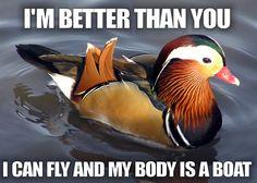 <3 Ducks!