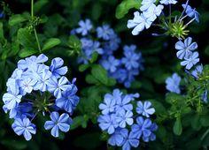 Blue On Pinterest
