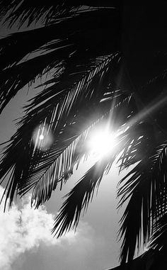 laying under a palmtree @ Ibiza – cottonclub – background iphone Black And White Picture Wall, Black And White Wallpaper, Black And White Painting, Black And White Pictures, Black And White Aesthetic, White Prints, Tree Wallpaper, Dark Photography, Background Pictures