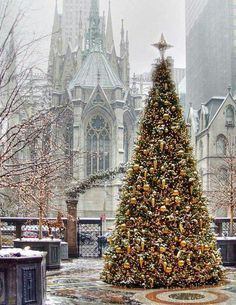 "A stunning Christmas tree outside St. Patrick's Cathedral in NYC/""O Christmas Tree! O Christmas Tree! Nyc Christmas, Christmas In The City, Christmas Scenes, Beautiful Christmas, All Things Christmas, Christmas Lights, Christmas Decorations, Merry Christmas, Outdoor Christmas"