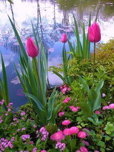 Monet's Garden ❤ﻸ•·˙❤•·˙ﻸ❤   ᘡℓvᘠ □☆□ ❉ღ // ✧彡●⊱❊⊰✦❁❀ ‿ ❀ ·✳︎· ☘‿WE JUN 14 2017‿☘✨ ✤ ॐ ⚜✧ ❦ ♥ ⭐ ♢❃ ♦♡ ❊☘‿ нανє α ηι¢є ∂αу ☘‿❊ ღ 彡✦ ❁ ༺✿༻✨