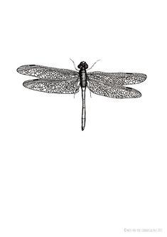 """missredfox - Print """"Dragonfly"""" - bnw, black & white, graphic, art, drawing, decoration // Poster Druck """"Libelle"""" - schwarz weiß, grafisch, Kunst, Zeichnung, Deko, Geschenk"""