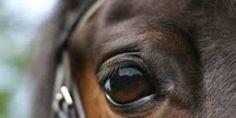 petition: BAN HORSE RACING: Broken Necks, Spinal injuries, Heart Attacks and DEATH