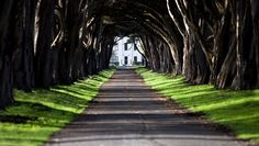 I want a long driveway lined with trees :) possibly with some twists and turns