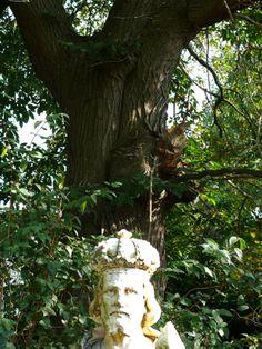 Cultureel Brabant CuBra Bomen Someren, de tamme kastanjes achter de pastorie
