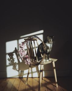 Cat in the house Dreamy Photography, Editorial Photography, Dog Shots, Little Memes, Shadow Play, Pretty Cats, Pretty Kitty, Butterfly Chair, Light And Shadow