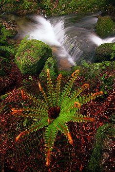 Monte Aloia Tui - Galicia National Park, Spain