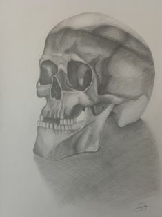 #humanskull #skull #study #drawing #pencil Human Skull, Pencil, Study, Drawings, Art, Art Background, Studio, Kunst, Sketches