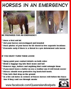 What to do with horses in an emergency. --> I don't think there would be time for all of this in an emergency...but some good ideas.